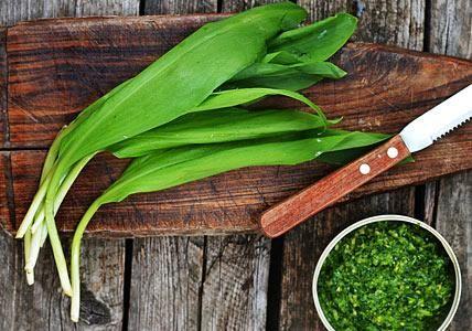 Bärlauch bringt feine Würze in Gerichte, zum Beispiel als Bärlauchpesto. Rezepte und Tipps rund um Bärlauch ernten, einfrieren und zubereiten.