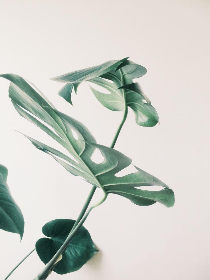 Скандинавские растения открытки, днем рождением