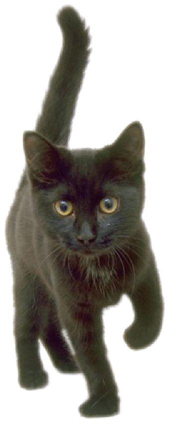 .cute black kitty
