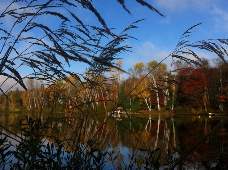 Grass and fall leaves and color reflections..! Photo by Kyal Stephen Smith. Dorset Ontario Canada.!Taken with IPhone 4.