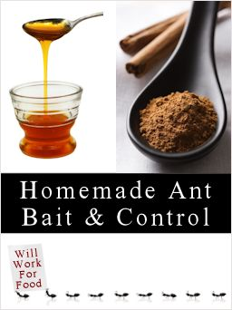 How To Make Homemade Ant Killers: Recipes