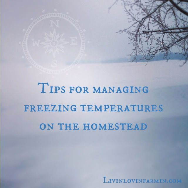 Managing Freezing Temperatures on the Homestead | Chickens | livestock | livinlovinfarmin (.com)