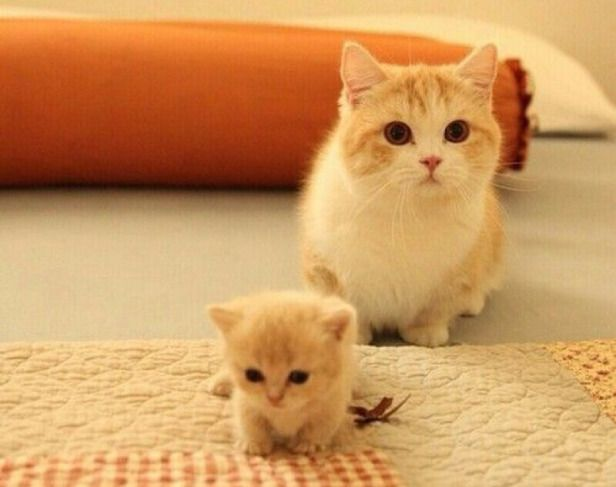 How adorable is this pic?