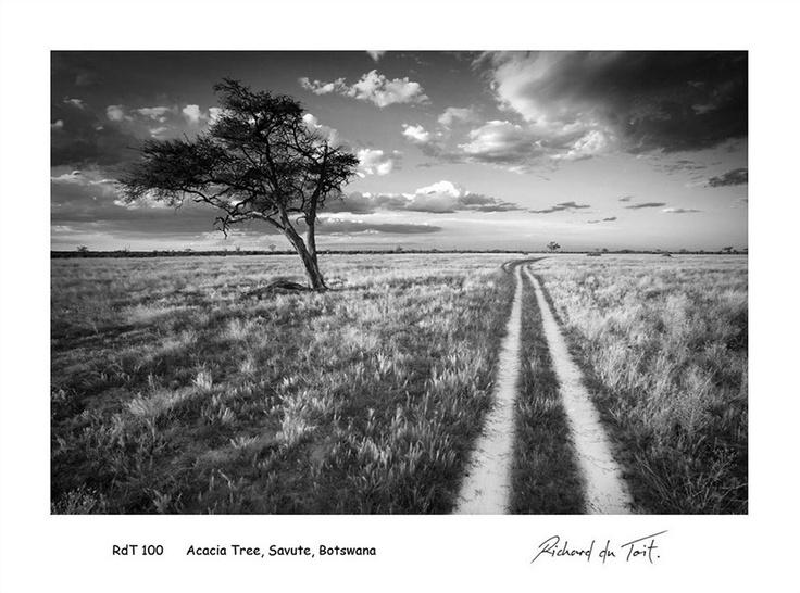 Acacia tree, Savute, Botswana by Richard du Toit