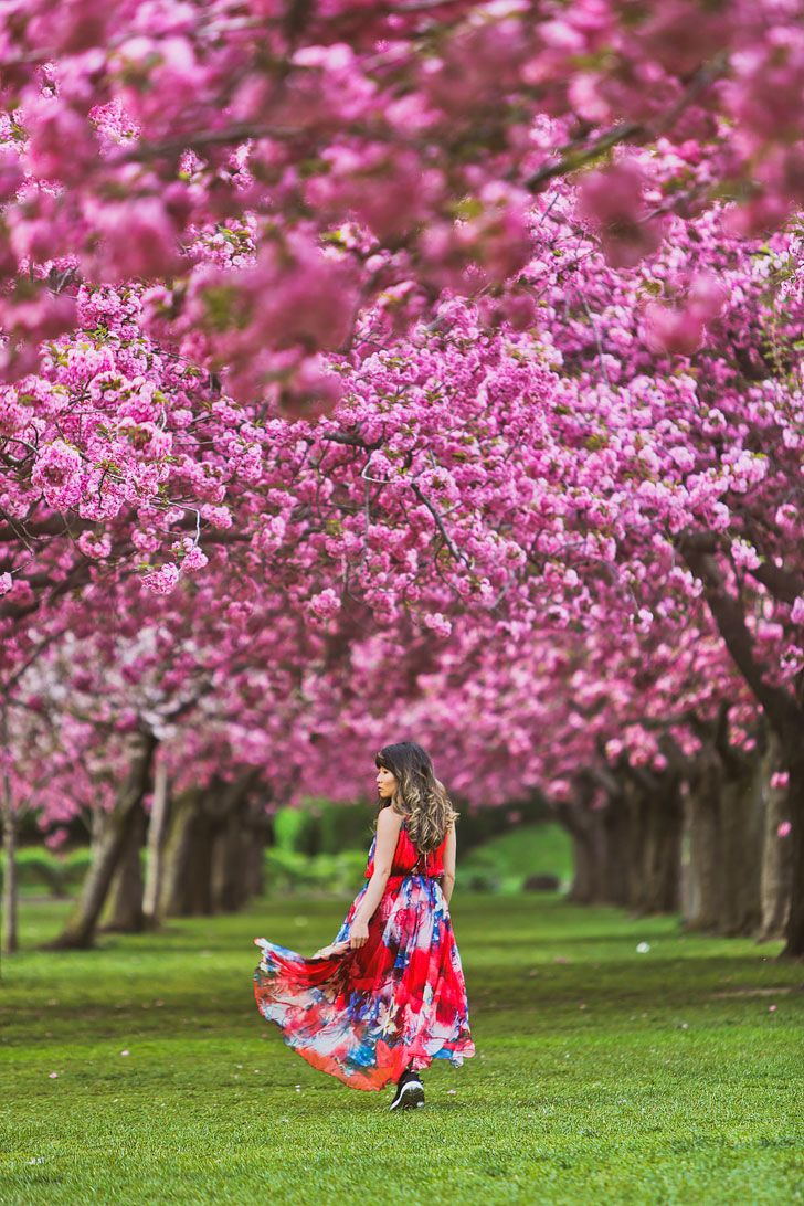 Best Places To See Cherry Blossoms In Nyc Places To See Scenic Road Trip New York Travel