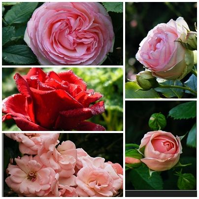 Az angol kert 10 legkedveltebb növénye - gazigazito.hu