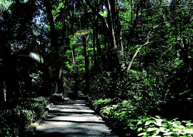 Combina Tudo - O Blog que é Sua Cara: Passeios em Sampa: Parque dos Eucaliptos