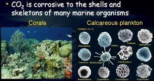 Impacts de l'acidification des océans