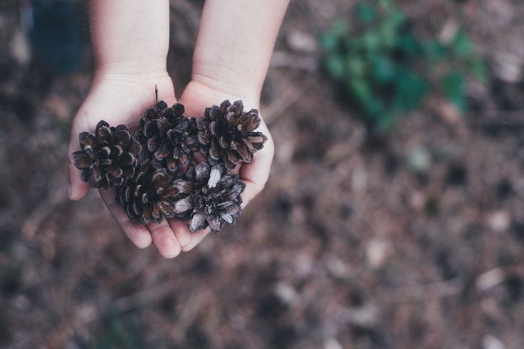 Taking Early Learning Outside: Nature Play in Preschools
