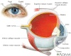 Conjunctivitis (Pink Eye) Causes and cure- PubMed Health