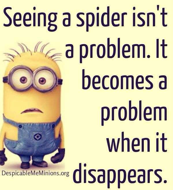 Spiders                                                                                                                                                     More