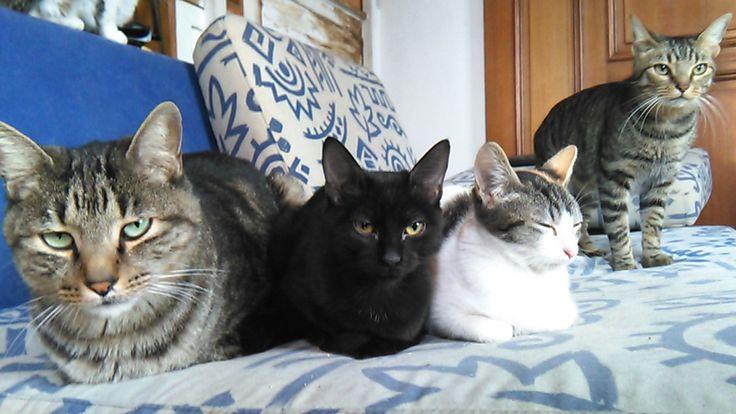 El vínculo entre los gatos y las personas. Análisis científico