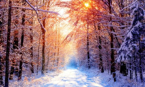 Christmas: Winter Snow, Winter Scene, Snow Forests, Sunsets, Winter Wonderland, Trees, Wallpapers, Roads