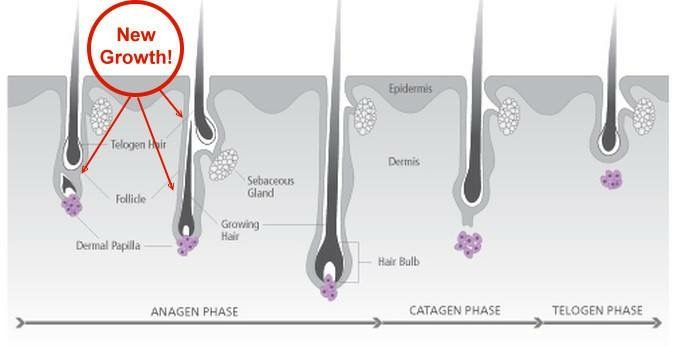 Pin By Kerstinn Tropp On Esthetics With Images Hair Growth
