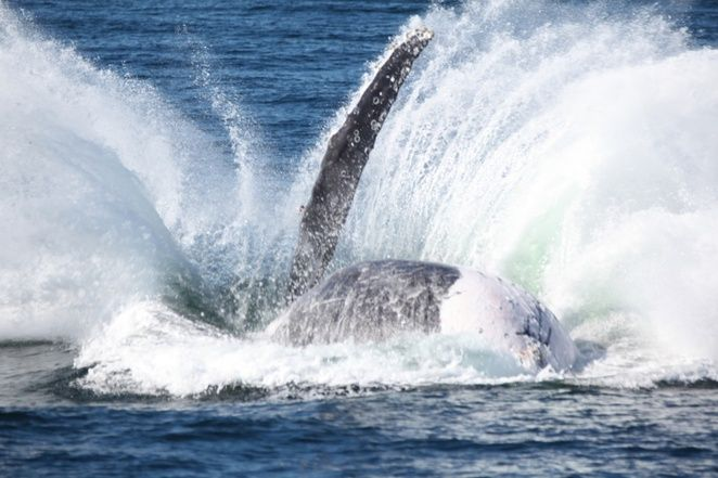 Moonshadow Cruises, Whale Watch Cruise, Port Stephens, Nelson Bay, Dolphin Cruise