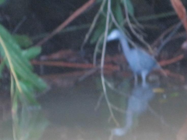 Costa Rica - December, 2011