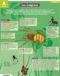 Les araignées - Mon Quotidien, le seul site d'information quotidienne pour les 10-14 ans !