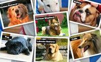 Pet Puzzles Dogs
