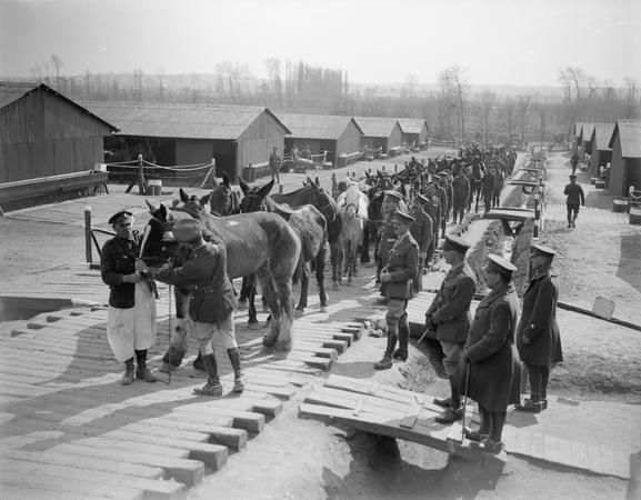 Wounded horses arriving at No. 5 Veterinary Hospital at Abbeville, 22 April 1918. © IWM (Q 10295)