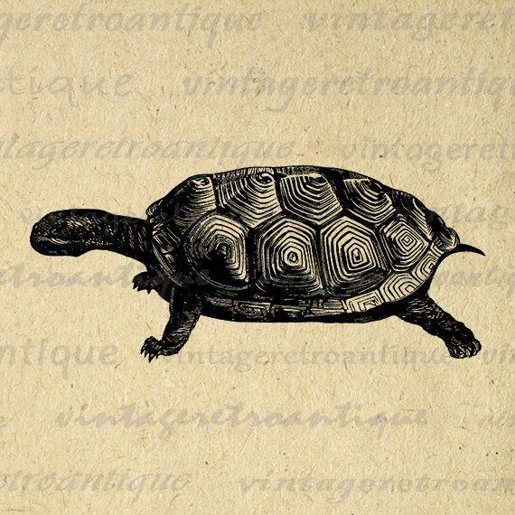 Digital Printable Tortoise Turtle Graphic Download Illustrated Image Vintage Clip Art Jpg Png Eps 18x18 HQ 300dpi No.2100 @ vintageretroantique.etsy.com