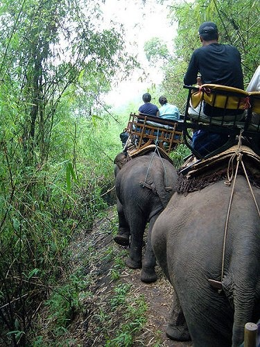 People riding elephants in Chang Rai, Thailand as I did as a child.