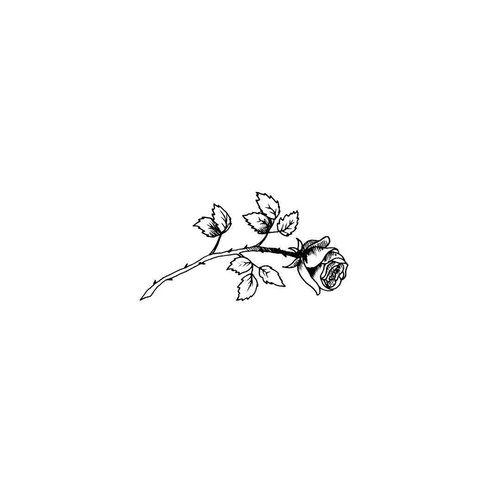Imagem de rose, flower, and white