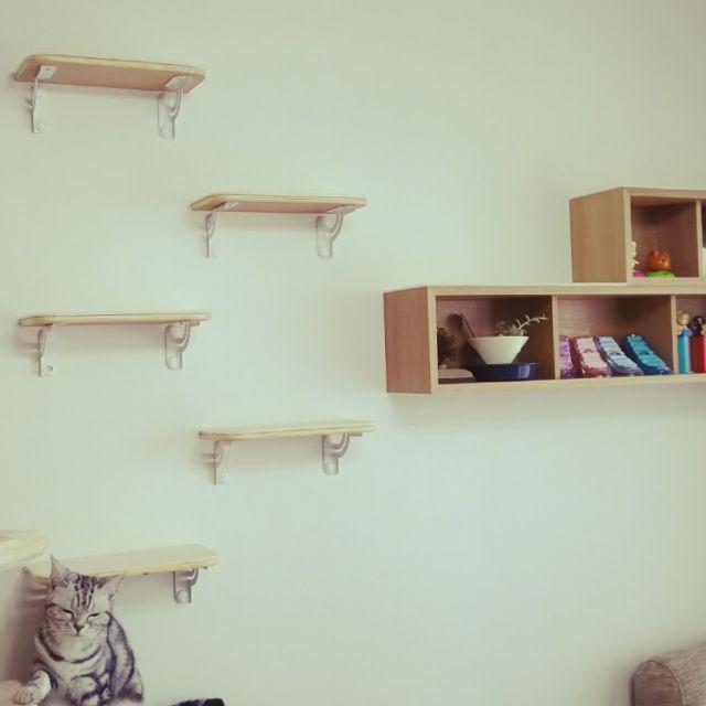 otomalala-0315さんの、猫多頭買い,キャットウォーク,無印良品,猫との生活,壁/天井,のお部屋写真