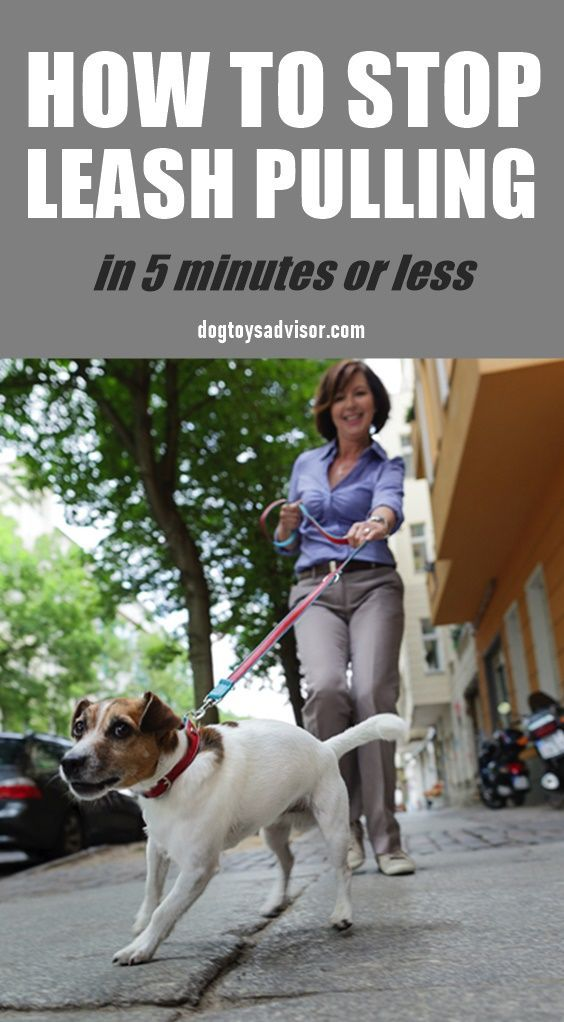 Do You Walk Your Dog Or Does He Walk You Here S How To Train Your