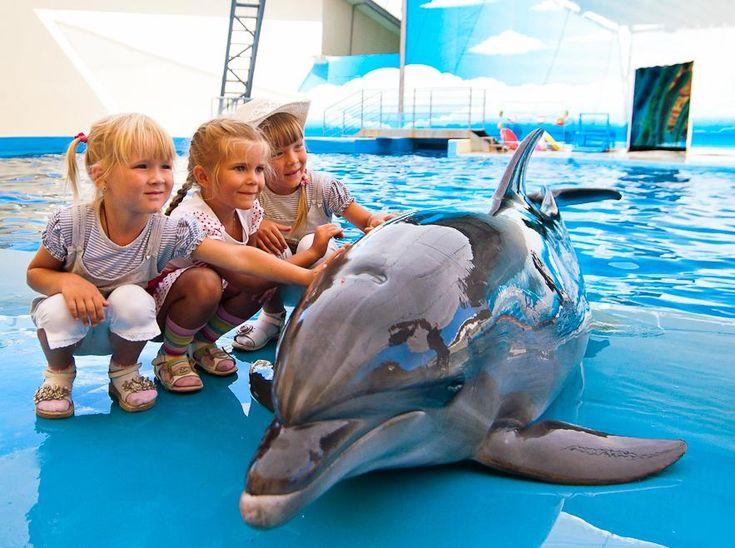 SOUND: http://www.ruspeach.com/en/news/11327/     Анапский дельфинарий Nemo был создан 19 июня 1992 года в поселке Большой Утриш, который расположен в 18 км от курортного города Анапа (Россия). Дельфинарий расположен в морской лагуне Черного моря и граничит с заповедником Большой Утриш. Дельфинарий открыт с 15 мая по 15 октября. В дельфинарии есть дельфины,  северные морские котики, белые белухи, морские львы, ларга.    Anapa Dolphinarium Nemo was created on June 19, 1992 in