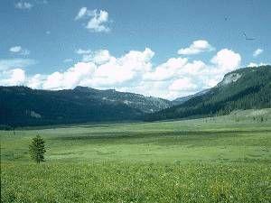 Bioma pradera y estepa, america del norte y los problemas ambientales son los fuertes vientos