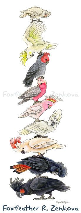 Cockatoo Stack Painting Print - Wall art, bird stack, totem pole, galah, palm, moluccan, parrot, goffin's, umbrella, watercolor, portrait