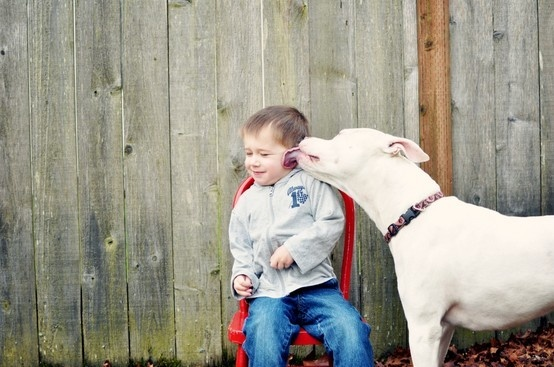 Aninimal Book: 206 best american bully images on Pinterest