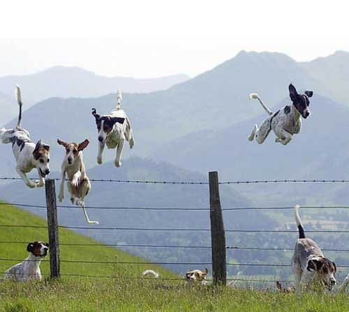 Raining dogs...Leap Years, Fly Dogs, Pets, The Hunting, Dogs Photos, Happy Dogs, Counting Sheep, Dogs Funny, Animal