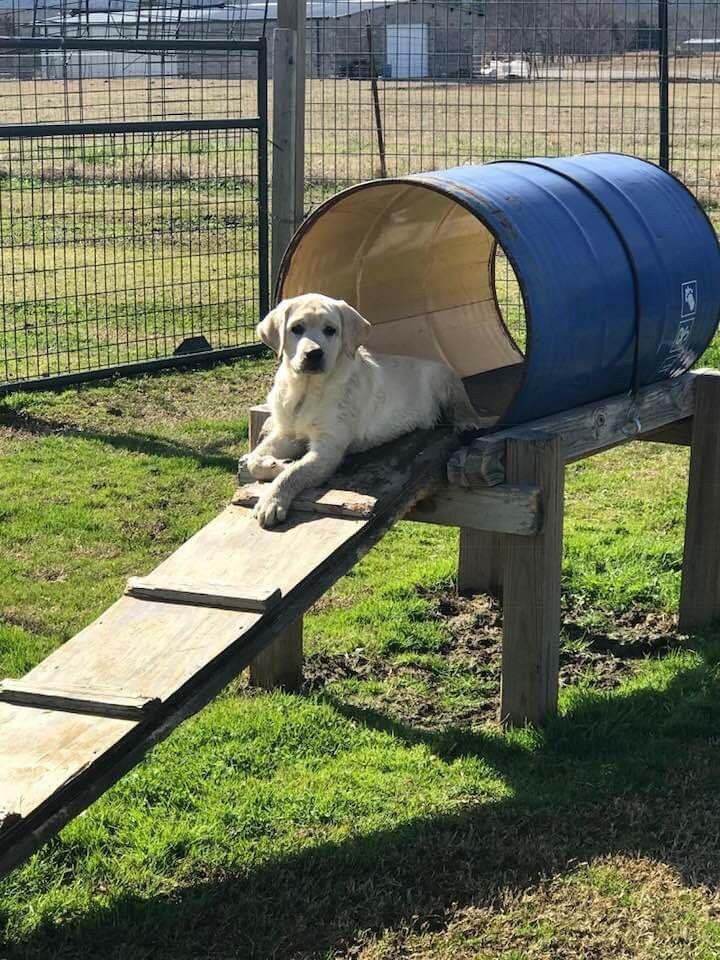 Easy Dog Playground Idea In 2020 Dog Playground Dog Backyard Puppy Playground
