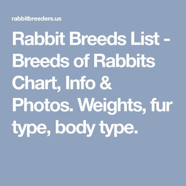 Rabbit Breeds List - Breeds of Rabbits Chart, Info & Photos. Weights, fur type, body type.