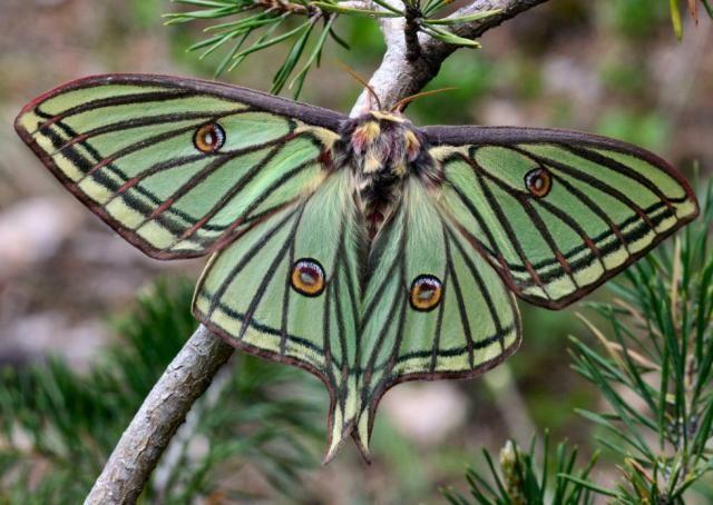Ranking de Mariposas: hermosas y fascinantes - Listas en 20minutos.es