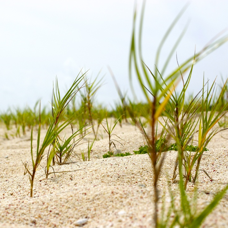 sand, beach, greens, sky by West Kast Pictures