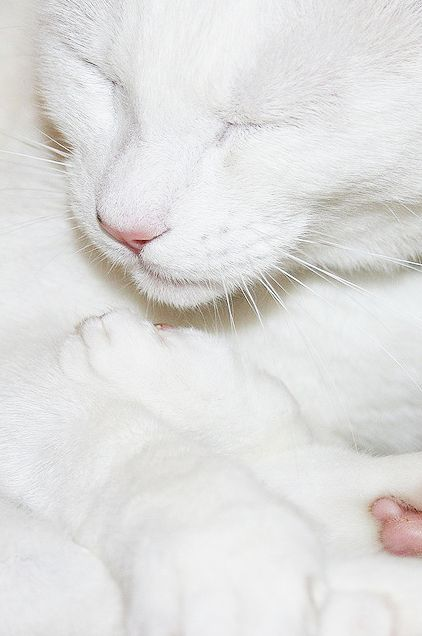 Magical all white cat...