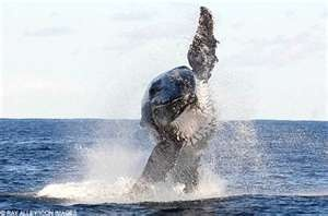 Go whale watching.Whales Watches,  Gray Whales, Grey Whales, Amazing View, Humpback Whales