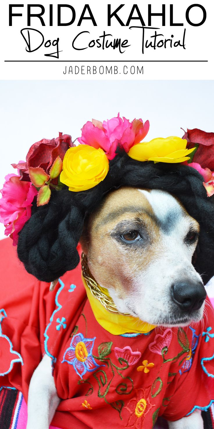 178 best diy pet costumes images on pinterest animal costumes diy frida kahlo dog costume tutorial from michaelsmakers jaderbomb solutioingenieria Images