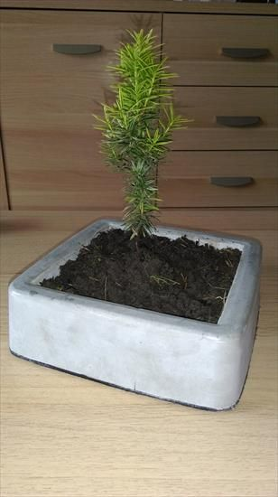 diy / homemade cement pot for bonsai domowej roboty betonowa doniczka do bonsai