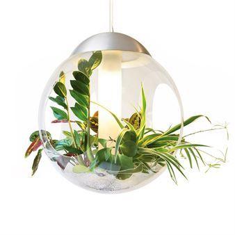 Smukke Babylone er en rund lampe lavet af plexiglas med plads til planter. Lampen har fem åbninger, der tillader at stængler og blade kan sno sig ud i verden.  Plant dine planter i pimpsten (fås i velassorterede blomsterbutikker), og dine planter har kun brug for vand hver tredje uge.  Mange forskellige slags planter kan bruges i Babylone og med pimpsten i forskellige farver, får hver lampe et unikt udseende!