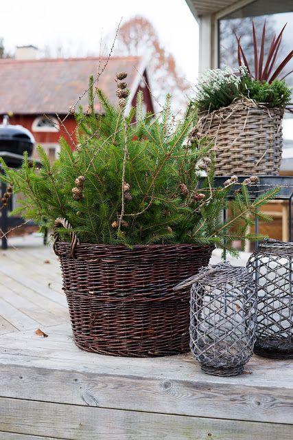 Granris och lärk, via ♥ Fyra årstider. Would love that for front or backyard porch.