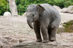 toooooooo cuteCutest Baby, Baby Elephant, Random Things, Cutest Things, Daww Baby, Elephant Baby, Animal Adorable, Cutest Animal, Adorable Animal