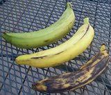 Plantains: great source for info. The difference between Green, Yellow & Black Plantains: Green are not ripe but can be used in many recipes. Black are ripest & sweetest.