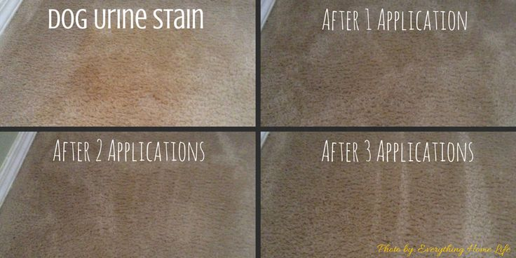 how to remove dog urine odor stains from carpet everything home life genesis 950 review. Black Bedroom Furniture Sets. Home Design Ideas