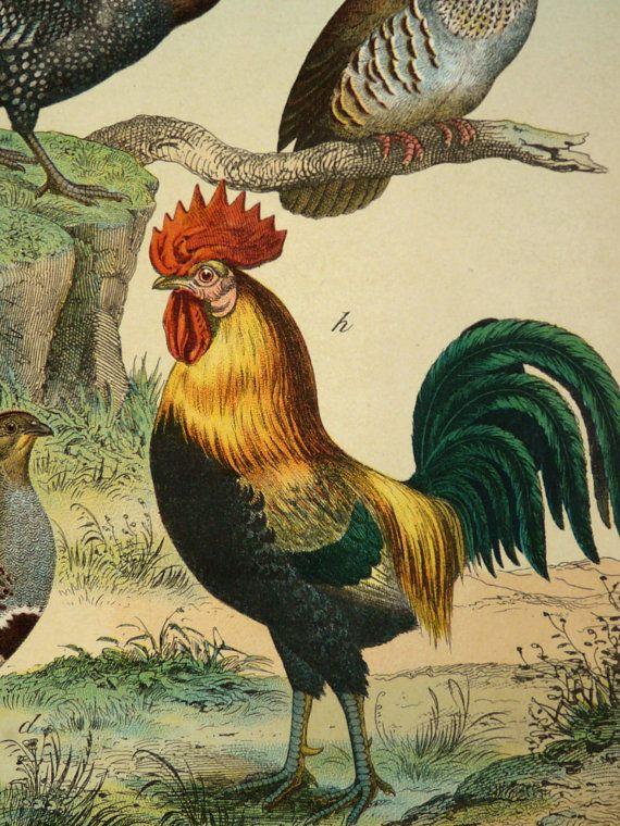 1886 Antique POULTRY print Turkey Guineafowl by AntiquePrintsOnly, $24.50