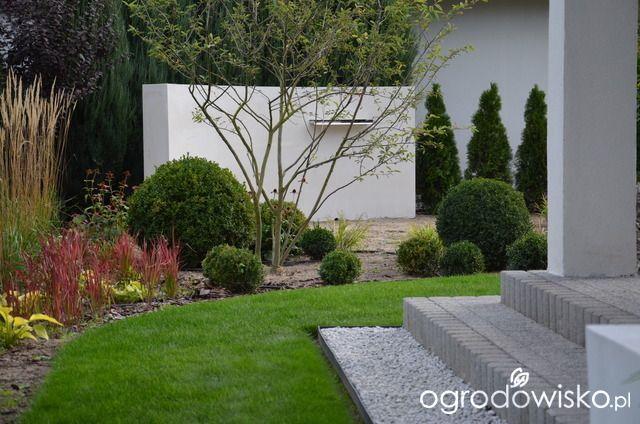 """Jak """"ożywić"""" mój szmaragdowy ogród - strona 1305 - Forum ogrodnicze - Ogrodowisko"""