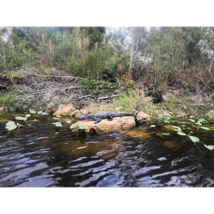 Everglades Airboat Tours Near Naples in 2020 Everglades