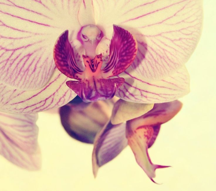orchid by sacadura